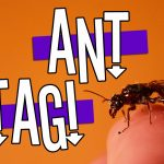 Click here for the 'Ant Tag' game Powerpoint image