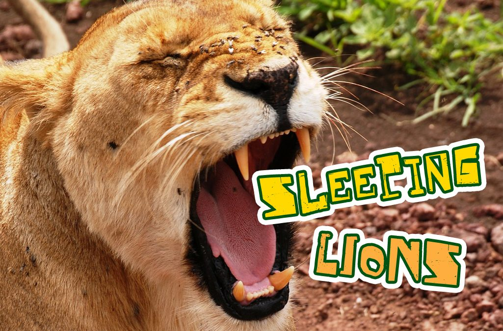 'SLEEPING LIONS' game image
