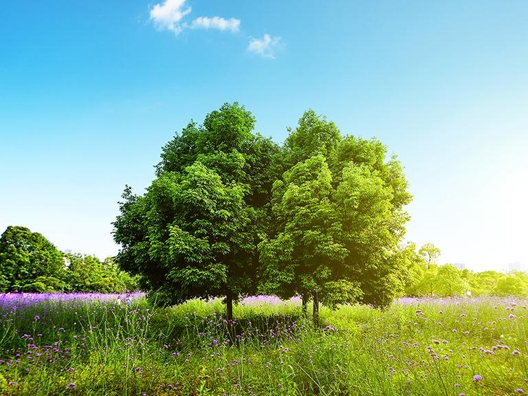 Best Videos to teach Kids about Zacchaeus